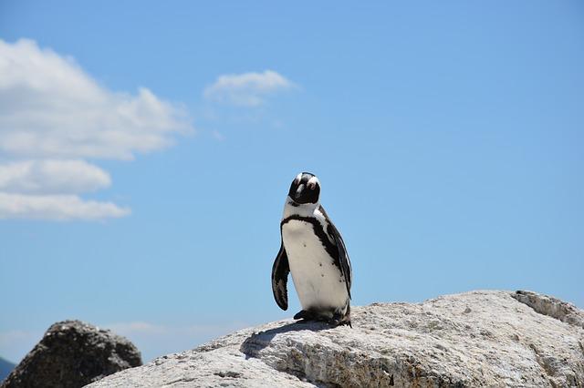 フンボルトペンギンの生息地や特徴!日本の動物園で見れる?